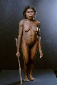 Homo Floresiensis will be on permanent exhibition in Wollongong from Monday