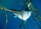 Calls to remove shark nets from Coledale, Austinmer and Thirroulbeaches