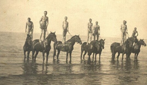 nude swimming horses