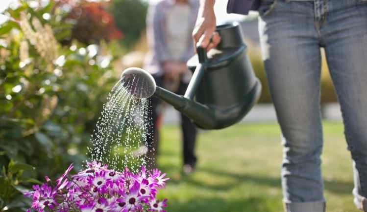 A-woman-wearing-jeans-watering-a-garden