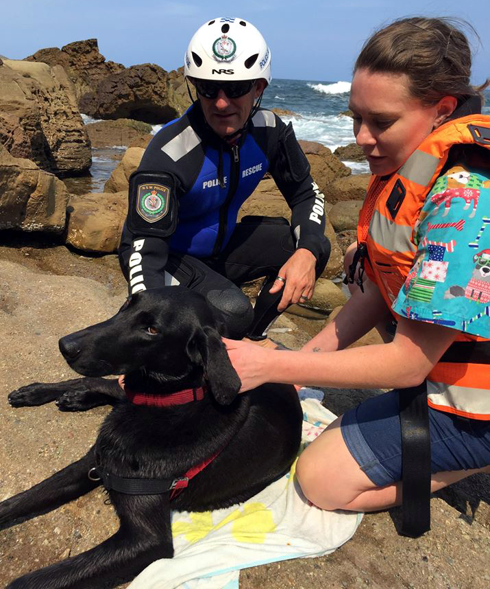 dog rescue stanwell park 3