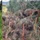 Sandon Point tree vandalism condemned and labelled as desecration of sacredland